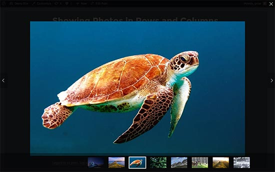 photobrowser-1